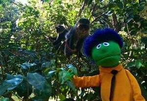 puppet monkey